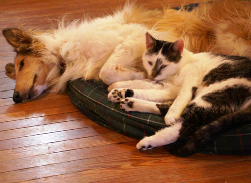 Collie Rescue of the Carolinas best friends